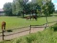 2012-06-06-1-ljubicevo_18