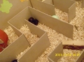 2011_12_02_fest_nauke_002