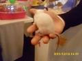 2011_12_02_fest_nauke_003