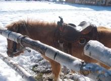 2013-12-03-zlatibor-045